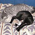 Daisy and Fala (12/28/2003)