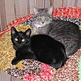 Daisy and Fala (1/2004)