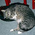 Daisy in the Kitty Pi Bed